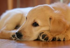puppy-1187270_640