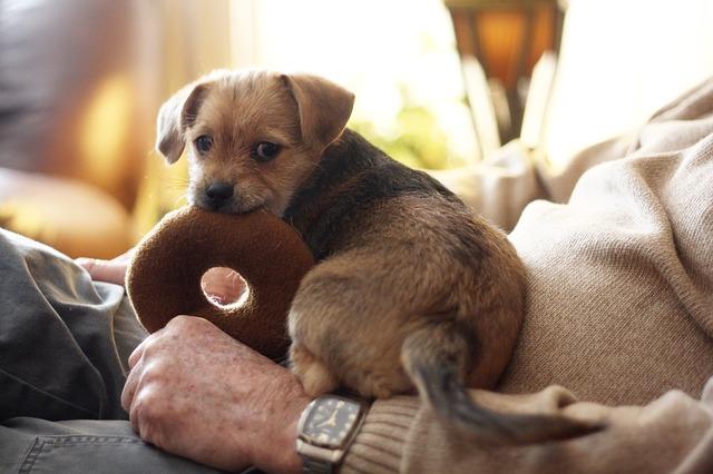 terrier-487964_640