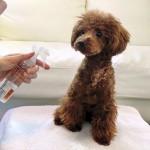 犬の毛玉がフェルト状になっている!ほぐし方はカットしかない?