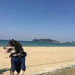 犬と一緒に行けるカフェ!福岡にはどんなお店がある?
