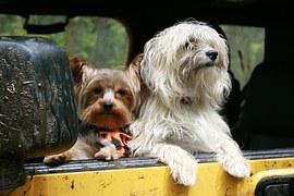 犬と一緒に観光&温泉!伊豆の湯けむりに癒されよう