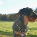 犬と一緒に観光しよう!山梨はアクティブに自然を満喫できる
