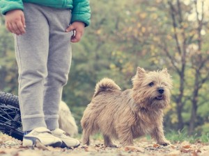dog-1006435_640