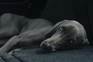 dog-1031058_640