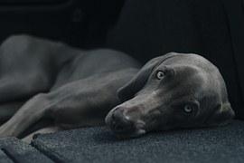 dog-1031058__180