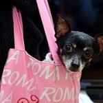 犬のイベントといえばこれ!関西開催のおすすめは?