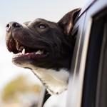犬と一緒の観光旅行!熱海で行くべきスポットは?