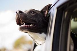 dog-1149964__180
