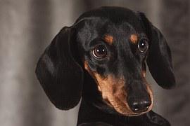 犬のリンパ腫!完治する治療法はあるの?