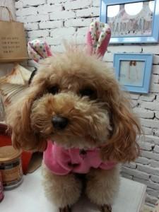 犬を連れて行けるカフェ!横浜のオシャレな人気店を紹介