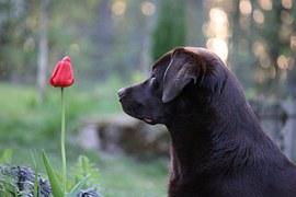 dog-786504__180