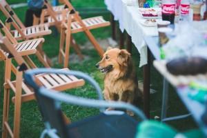 犬と参加できるおすすめイベント情報!関東編