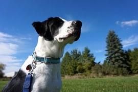 犬と遊べる観光地!岡山は農園系が充実している!?
