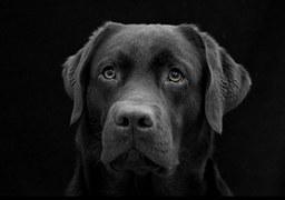 dog-996489__180