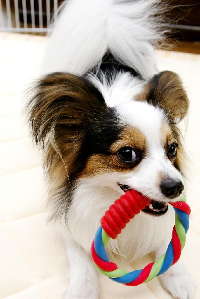 dog0011-018