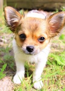 puppy-240724_640