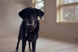 senior-dog-1149760__180