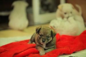 stray-dog-1153229_640
