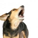 犬が玄関で吠える!誰もいないのに反応する時の3つの対処法