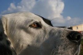 犬のフィラリアの薬の種類は?値段や副作用についても紹介!