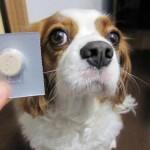 犬のノミダニ予防の飲み薬!効果やリスクを徹底調査してみた