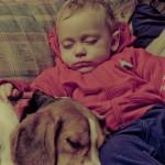 犬による喘息も!赤ちゃんとペットが一緒に暮らす注意点は?