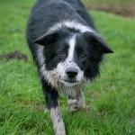 犬が脳梗塞に!余命はどのくらい?回復する可能性はあるの?