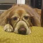 犬が老犬になるのは何歳から?起こりやすい老化の症状とは!