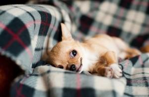 犬のフケ!痒みをともなうかさぶた状の場合の対処法は?