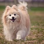 犬の去勢手術!失敗のリスクや後遺症が残る可能性はある?