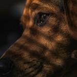 保健所の犬の引き取り方法!地域によって違いはある?
