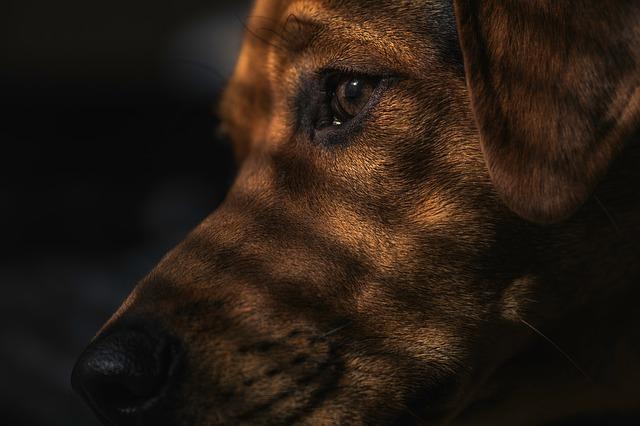 dog-1149188_640