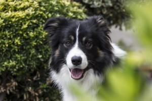 dog-1158319_960_720