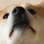 犬のひげには意味がある!?カットしてはいけないって本当?