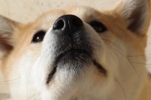 dog-1203351_960_720