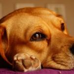 犬が脳腫瘍に・・・最期を迎える直前の末期症状とは?