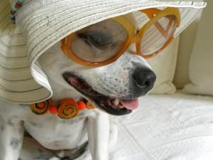 dog-324768_960_720