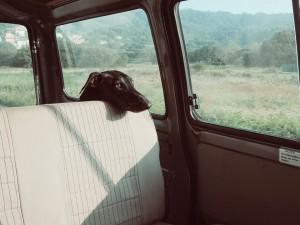 dog-922984_960_720