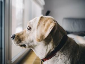 dog-926220_960_720