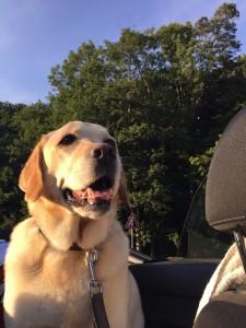 dog-in-the-car-1002131_960_720