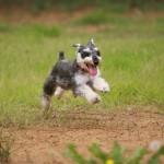 犬がドッグランで吠える!やめさせるために有効なしつけは?