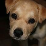 犬の保護のボランティアがしたい!どんな活動をするの?