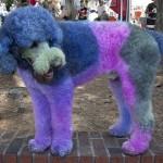 犬の美容院の料金相場!ペット用のカラーやエクステは!?