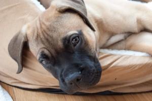 puppy-1105452_960_720