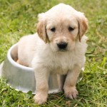 犬のゲップが臭い原因は病気!?すぐに出来る対処法は?