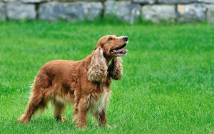 人気犬種21