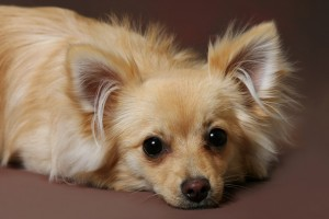 人気犬種3