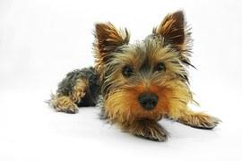 人気犬種7