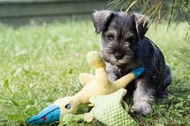 人気犬種8