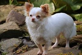 人気犬種2